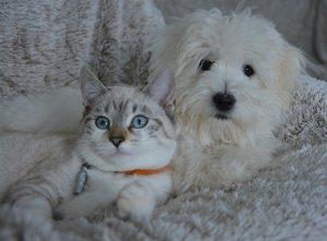 cohabitation chat chien