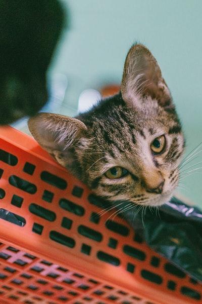 chat plastique